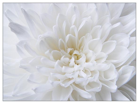 Белым-бело. Изображение № 6.