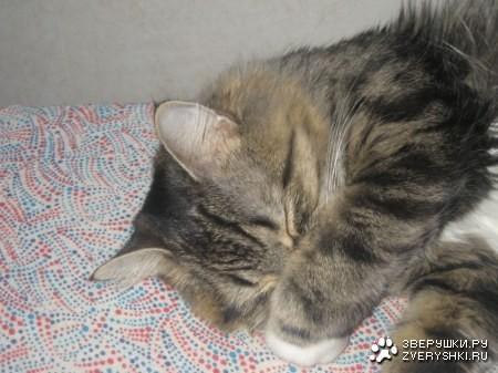 Кошки- лучшие целители. Изображение № 3.
