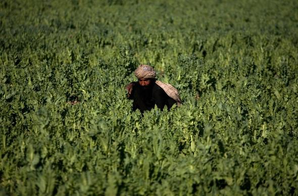Афганистан. Военная фотография. Изображение № 267.