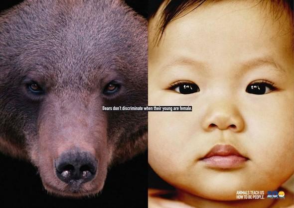 Животные учат нас быть людьми. Изображение № 2.