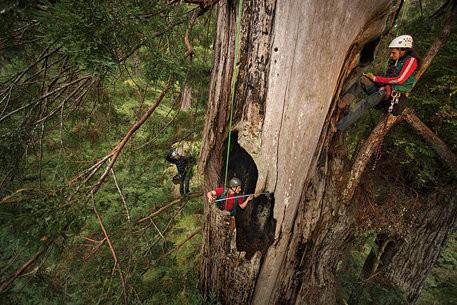 Секвойные истории: фотопроект National Geographic. Изображение № 1.