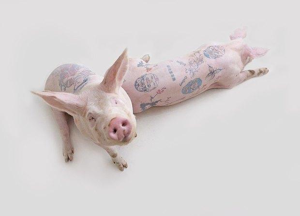 Почему голодная собака  и татуированные свиньи — это искусство. Изображение № 9.