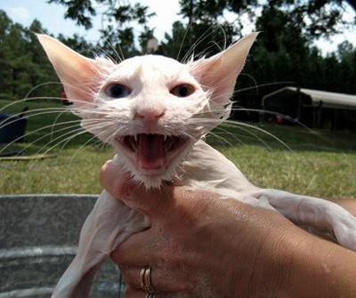 50 животных, которые ненавидят мыться. Изображение № 10.