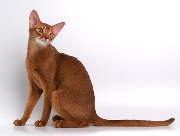 Кошки в интерьере. Изображение № 5.