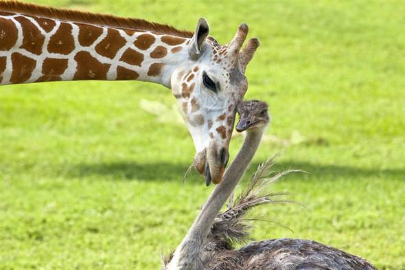 Дружба - она и у животных дружба!. Изображение № 4.
