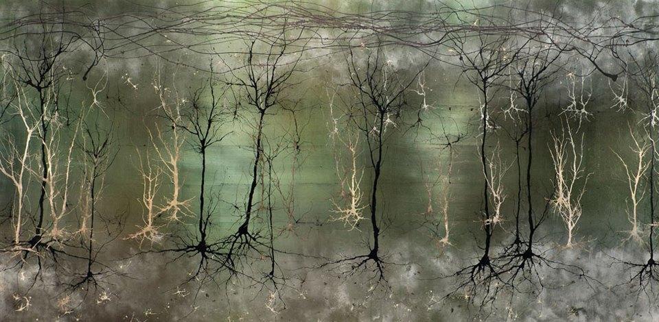 Головной мозг на загадочных картинах нейробиолога. Изображение № 1.