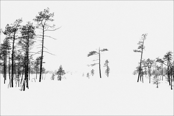 Изображение 30. Выходные в шведском лесу.. Изображение № 30.