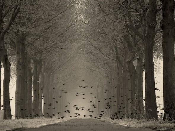 Фотография Ларса ван де Гоора. Изображение № 23.