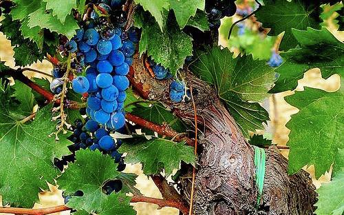 Мастер-класс по итальянским винам в «Коллекция Вин». Изображение № 3.