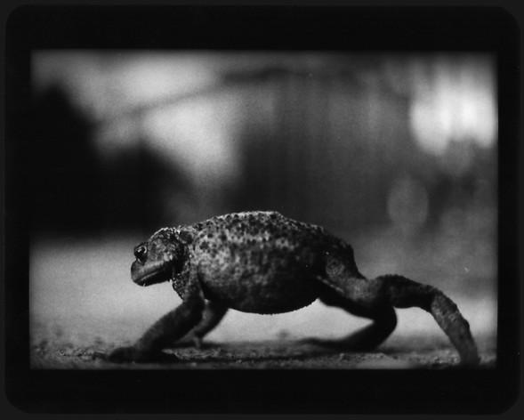Джакомо Брунелли и«другие» животные. Изображение № 6.