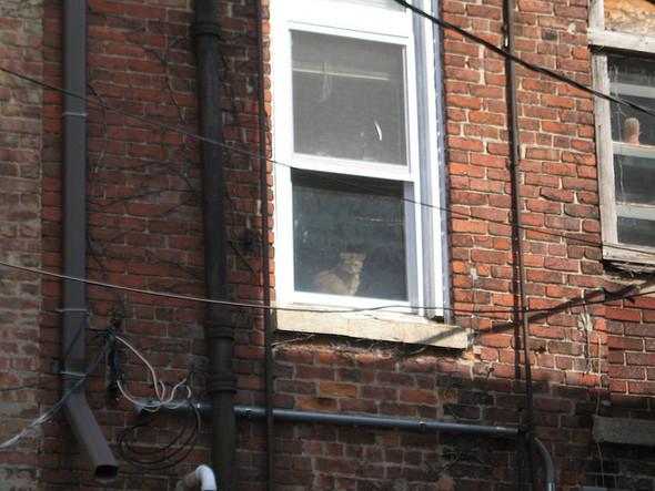 Cat. Window. Изображение № 40.