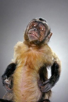 """Jill Greenberg """"Monkey portraits"""". Изображение № 47."""