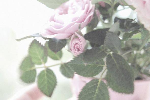 Изображение 9. Никогда не надо слушать, что говорят цветы. Надо просто смотреть на них и дышать их ароматом... Изображение № 9.