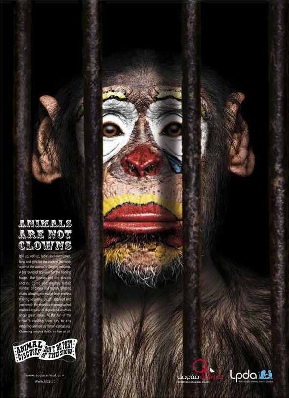 Animals are not clowns. Изображение № 3.