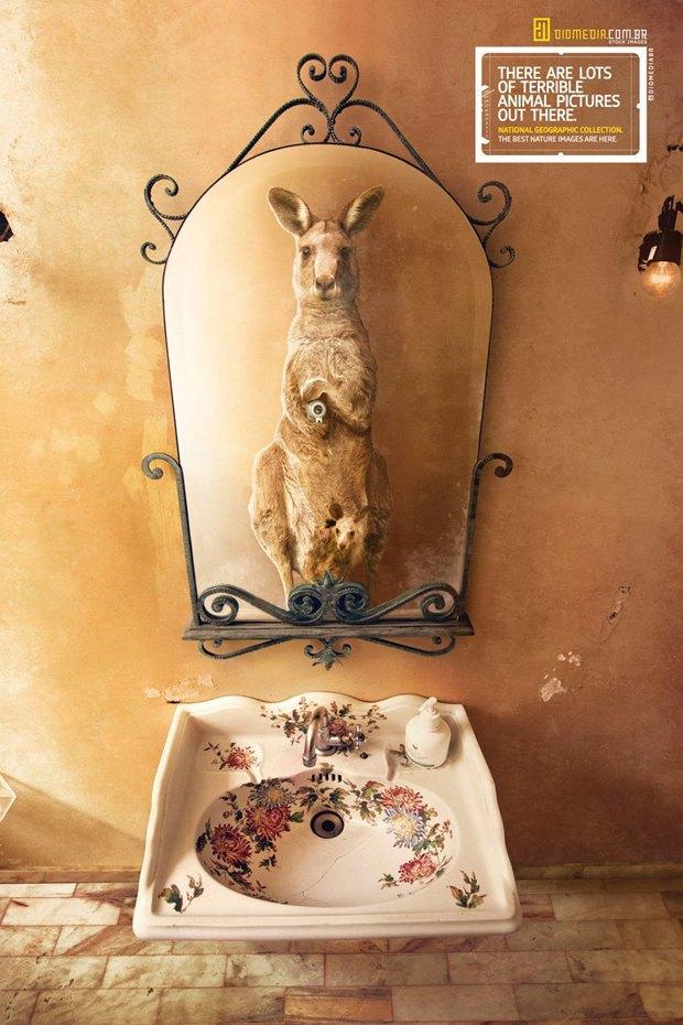 Животные делают селфи в новой рекламе National Geographic. Изображение № 5.