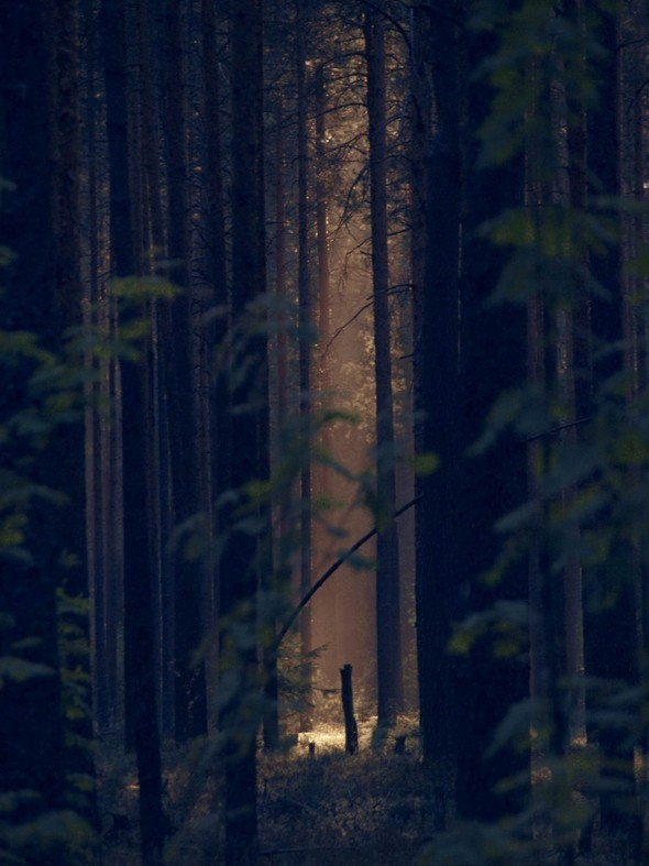 Фотограф Андрей Пушкин. Изображение № 10.