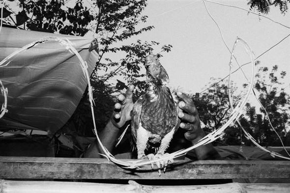 20 лучших молодых фотографов: Выбор Dazed&Confused. Изображение № 134.
