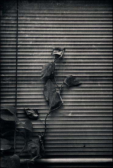 Байки изандеграунда. Изображение № 18.
