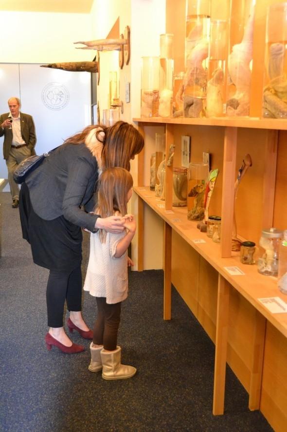 Фаллологический музей вернулся в Рейкьявик. Изображение № 14.