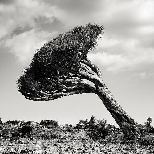Пустынные пейзажи. Джозеф Хофленер. Изображение № 11.