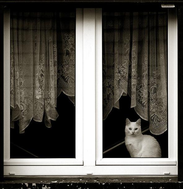 Cat. Window. Изображение № 12.