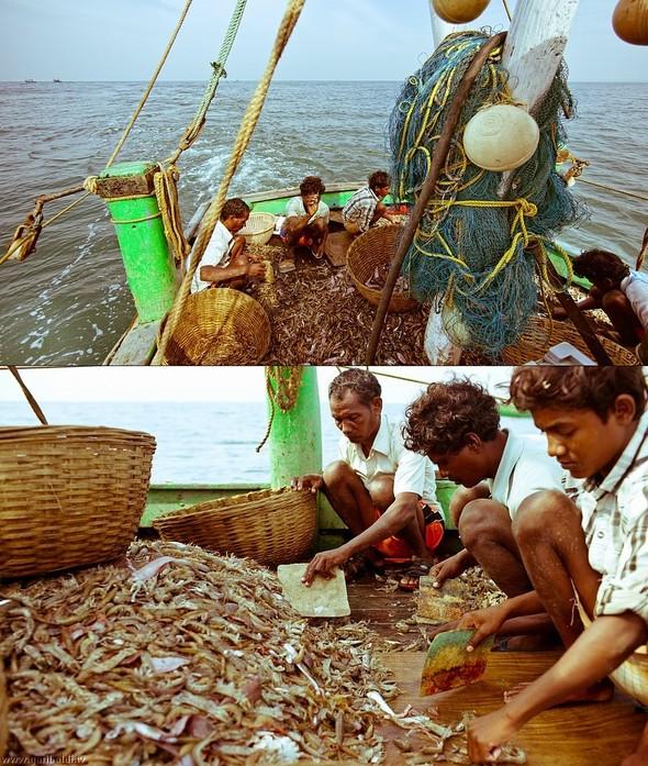 Shrimp boat MFR 646 DF GOA - Non stop. Изображение № 16.