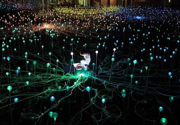 Рождественские огни Bruce Munro. Изображение № 2.