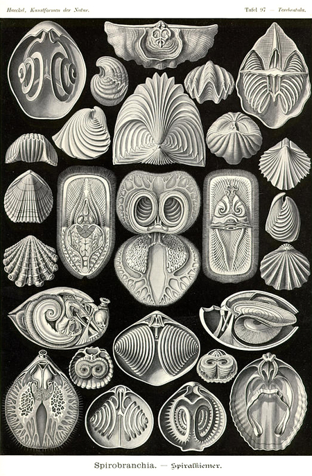 Причудливые формы природы. Изображение № 46.