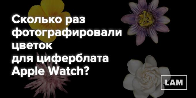 Число дня: сколько раз фотографировали цветок для Apple Watch. Изображение № 1.