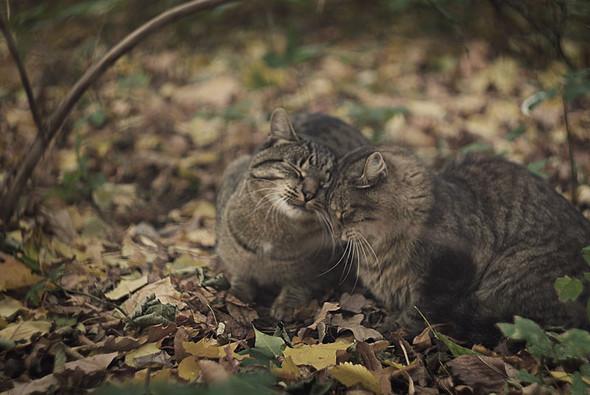 Блудливые коты. Изображение № 19.