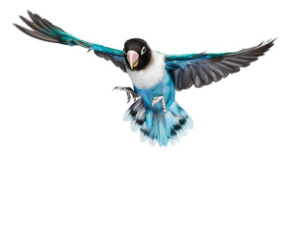 Божественные птицы Andrew Zuckerman. Изображение № 4.
