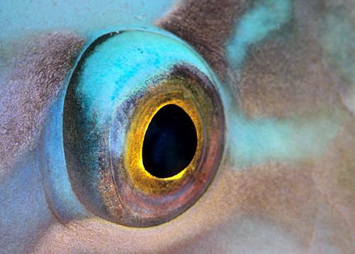 «Глубокий» Взгляд фотографа. Изображение № 10.