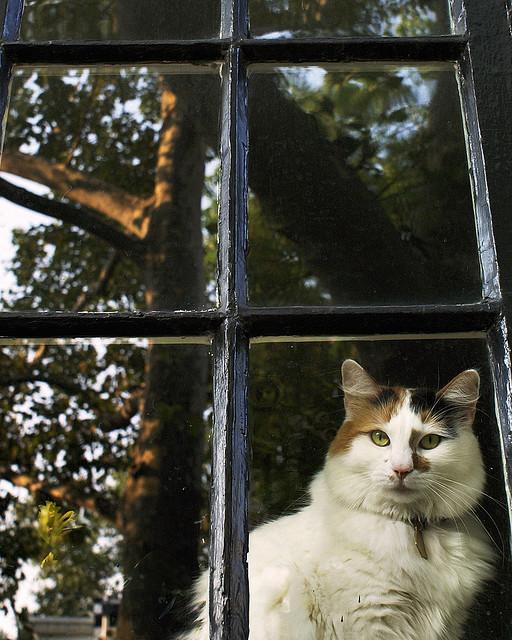 Cat. Window. Изображение № 18.