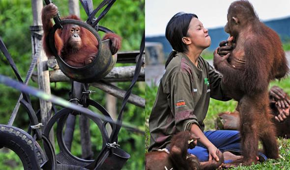 Лоун Дрошер-Нилсен и её обезьянки. Изображение № 7.