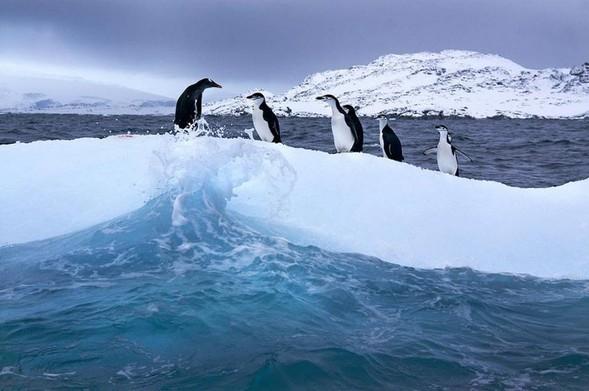 Лучшие новые снимки от National Geographic. Изображение № 18.