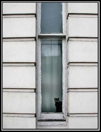 Cat. Window. Изображение № 17.