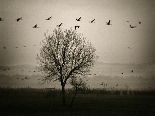 Фотохудожник Юрий Бондер. Изображение № 24.
