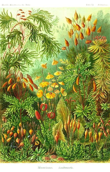 Причудливые формы природы. Изображение № 29.