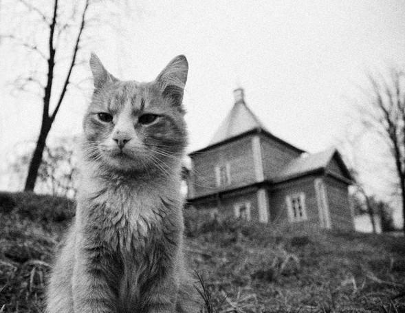 Блудливые коты. Изображение № 5.