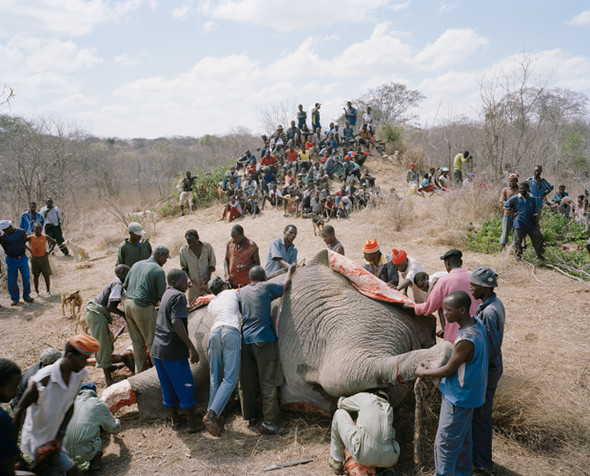 David Chancellor: охота на слона. Изображение № 3.