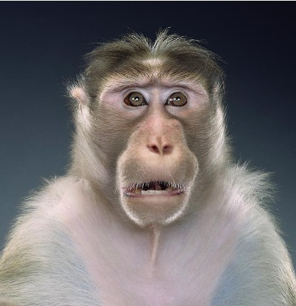 "Jill Greenberg ""Monkey portraits"". Изображение № 10."