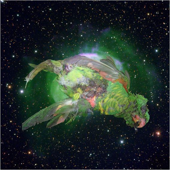 Белок на обочинах сверхновых. Изображение № 8.
