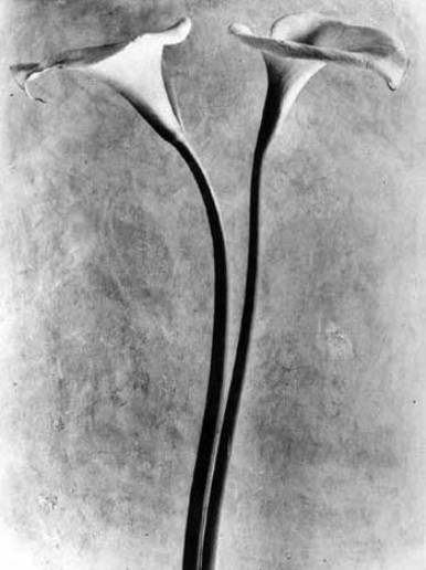 Жизнь в забвении: Фотографы, которые прославились после смерти. Изображение № 154.