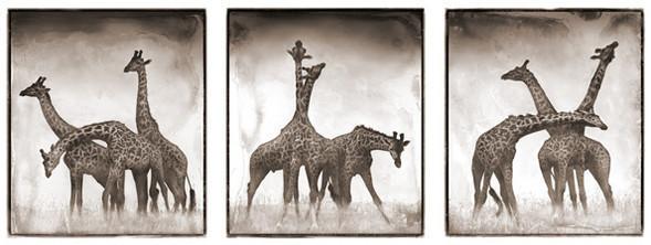 МояАфрика. Изображение № 13.