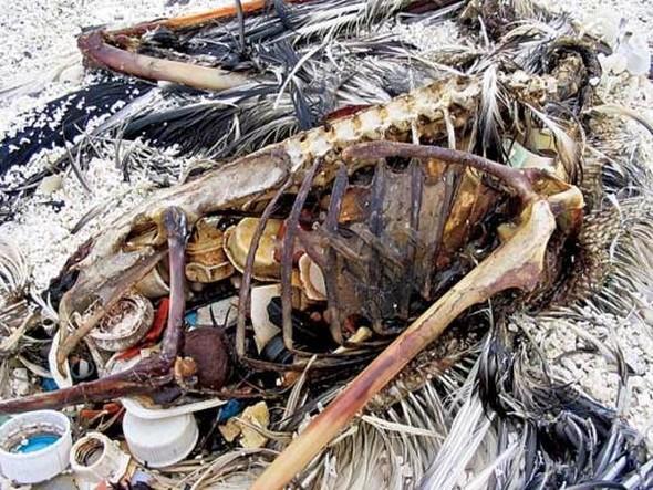 Морской пластиковый суп. Изображение № 5.