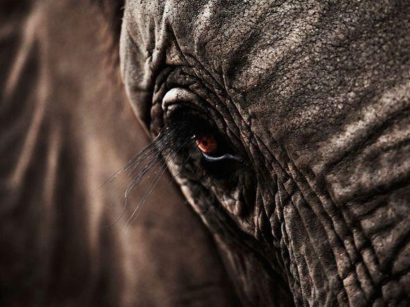 Elephant, South Africa. Изображение № 13.