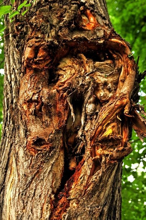 Treefilia. Изображение № 12.