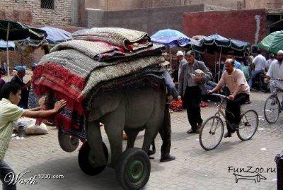 Какспрятать слона. Изображение № 24.
