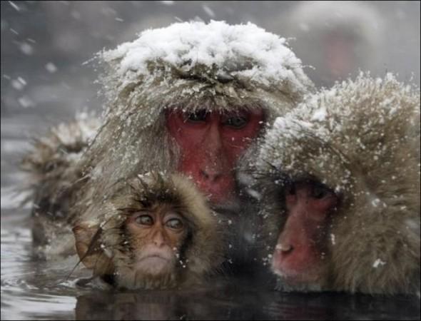 И даже обезьянам нужен отдых. Изображение № 4.