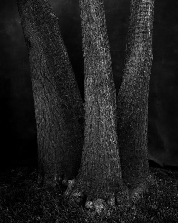 Изображение 27. Альберт Уотсон - шотландский фотограф, покоривший мир.. Изображение № 27.